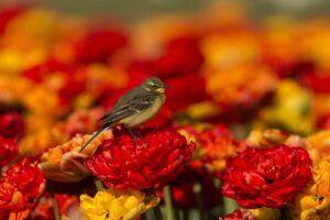 Vogelrijke omgeving